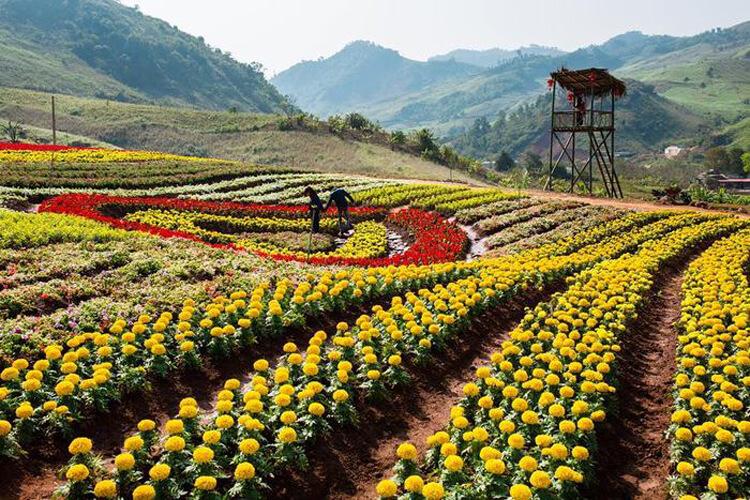 Những địa điểm du lịch Mộc Châu